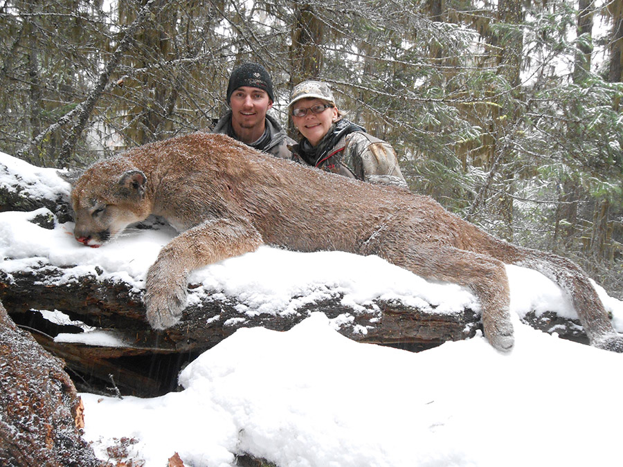 Cougar Hunt Ambler's Bighorn Country Guiding