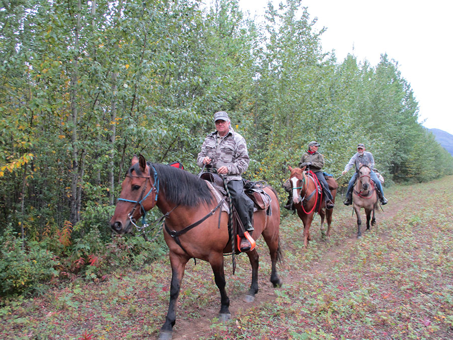 Sheep Hunt with Pelly Lake Outfitters