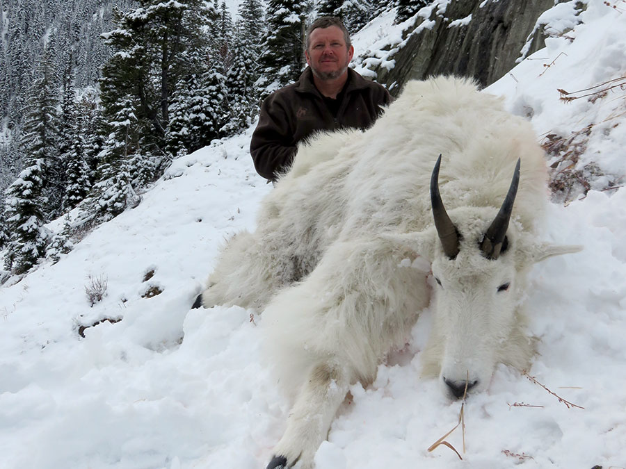 Beaverfoot Outfitters Mountain Goat