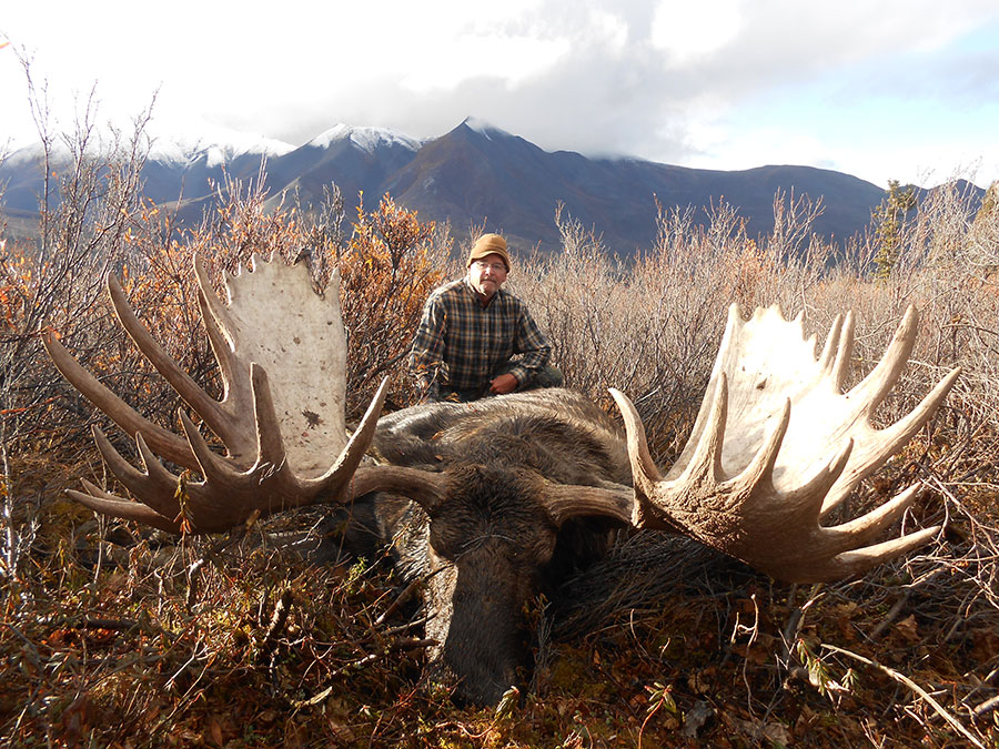 Mackenzie Mountain Outfitters Moose